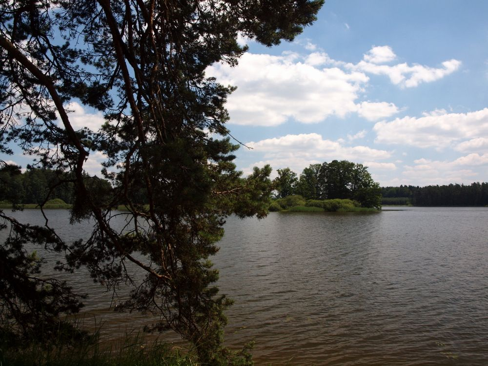 Фото бесплатно вода, крона, дерево, листья, гладь, пейзажи, природа, природа