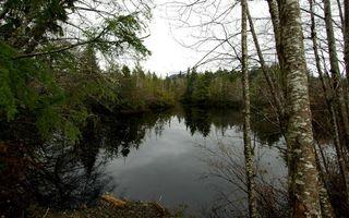 Бесплатные фото вода,река,озеро,лес,деревья,берег,трава