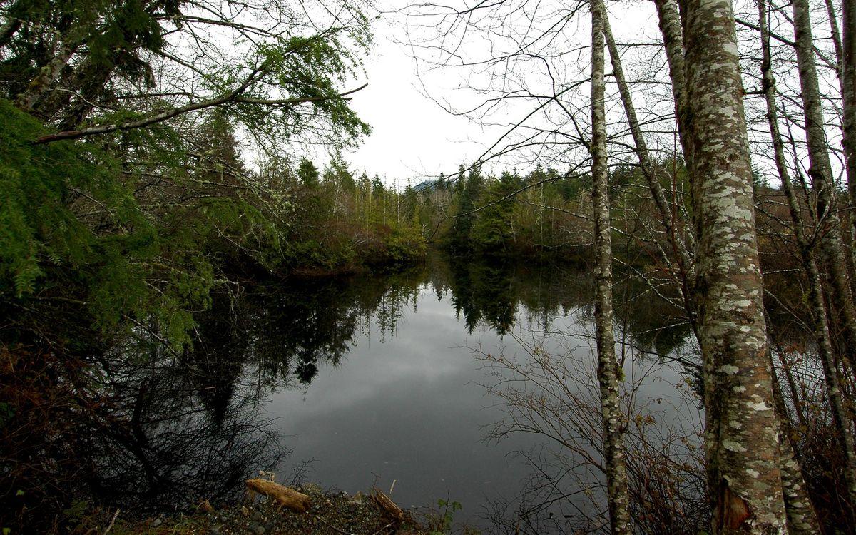 Фото бесплатно вода, река, озеро, лес, деревья, берег, трава, природа, природа