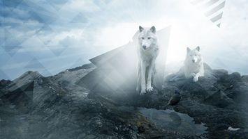 Бесплатные фото волки,пара,семья,шерсть,уши,лапы,глаза