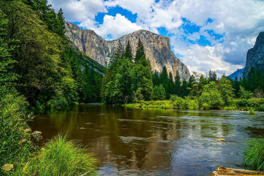 Фото бесплатно лес, Калифорния, река - на рабочий стол