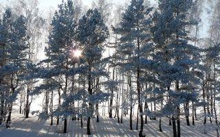 Фото бесплатно зимний лес, восход, солнца