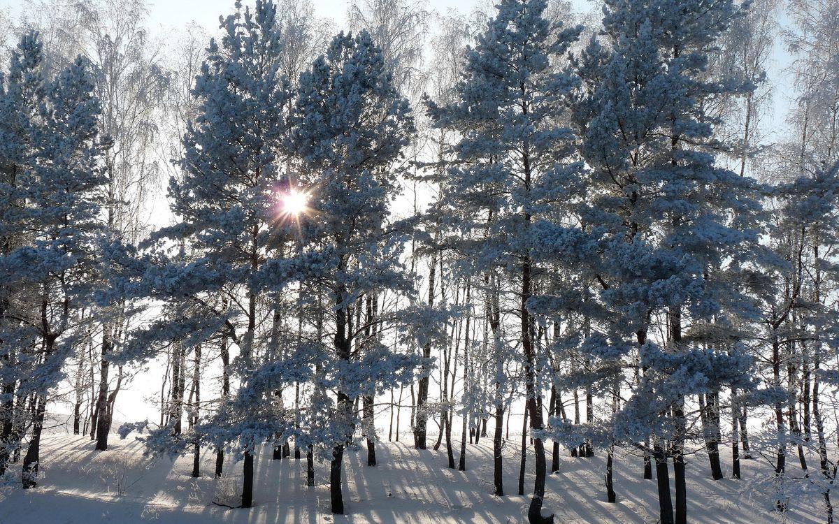 Фото бесплатно зимний лес, восход, солнца, деревья в снегу, лучи, снег, природа, природа