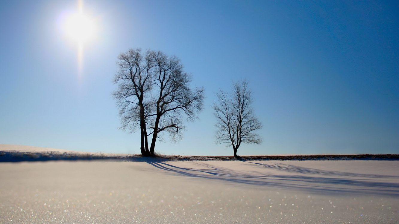 Фото бесплатно пустыня, дерево, песок, трава, горизонт, солнце, лучи, пейзажи, пейзажи