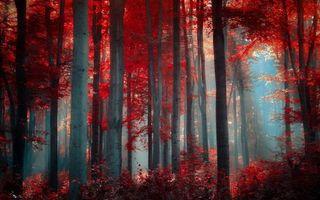 Фото бесплатно деревья, листья, красные, осень, лес, туман, природа