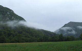 Бесплатные фото деревья,трава,листья,возвышенность,испарение,пар,пейзажи