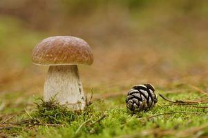 Фото бесплатно гриб, белый, макро