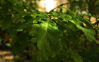 Фото бесплатно клен, листья, вода
