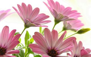 Бесплатные фото лепестки,розовые,листья,стебли,зеленые,цветы