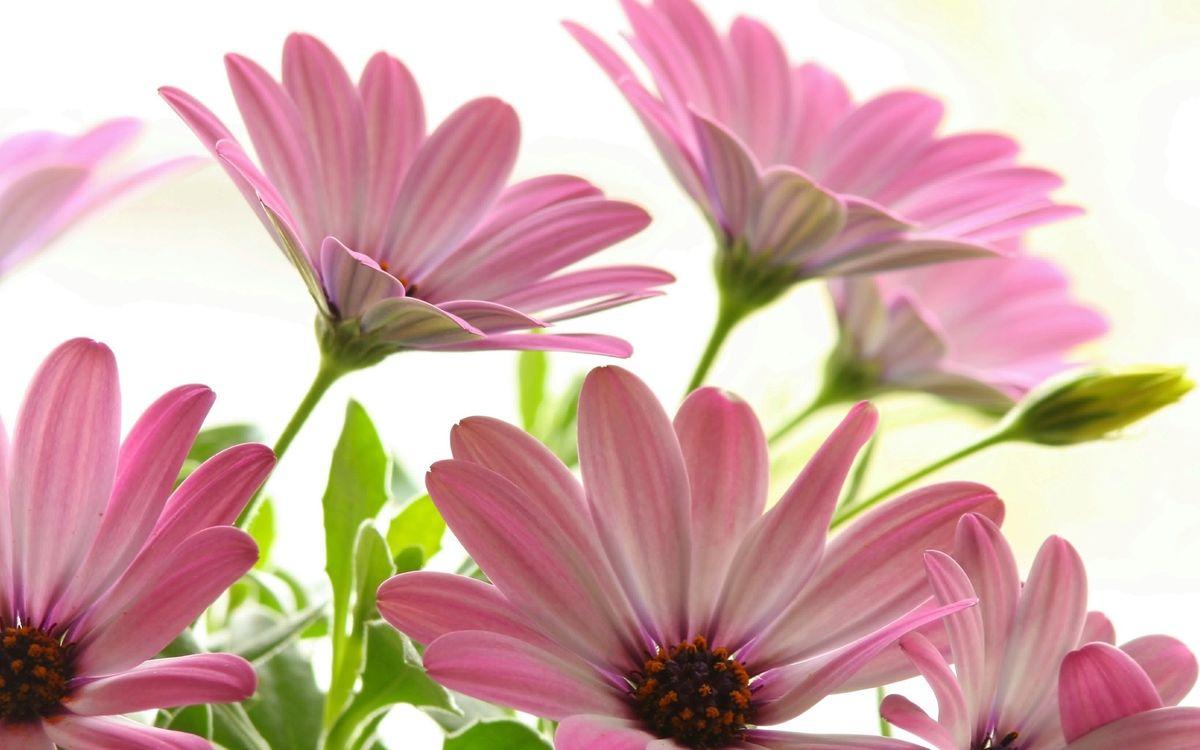 Фото бесплатно лепестки, розовые, листья, стебли, зеленые, цветы, цветы
