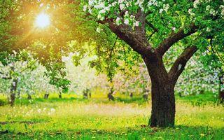 Фото бесплатно лето, сад, солнце, природа