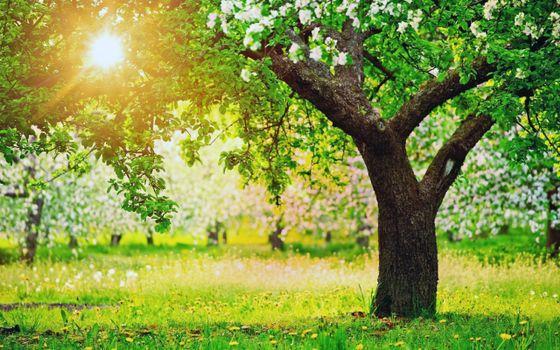 Фото бесплатно лето, сад, солнце