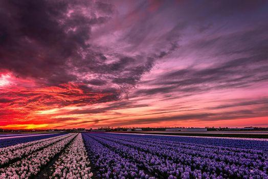 Заставки Lisse-Netherlands, Лиссе, Нидерланды закат