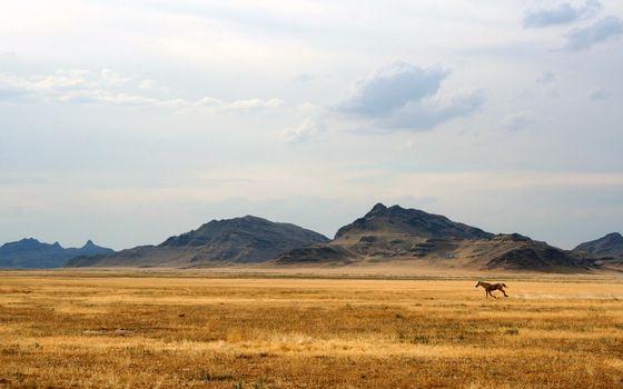 Фото бесплатно желтый, животные, грива