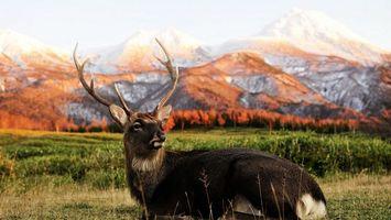 Бесплатные фото олень,рога,уши,голова,шерсть,зверь,дикий