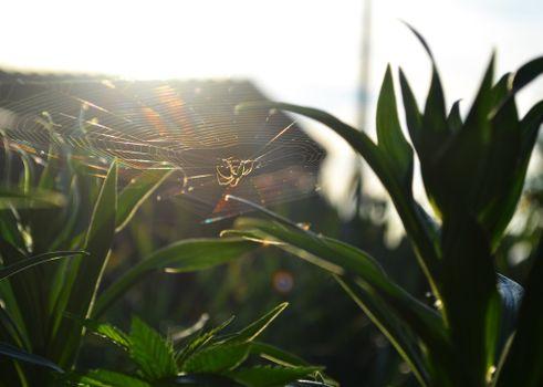 Заставки паук, паутина, растения, солнце, природа
