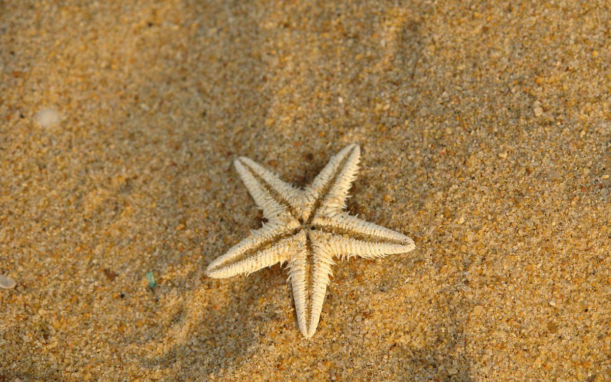 Фото бесплатно песок, желтый, звезда, морская, сухая, подводный мир, подводный мир