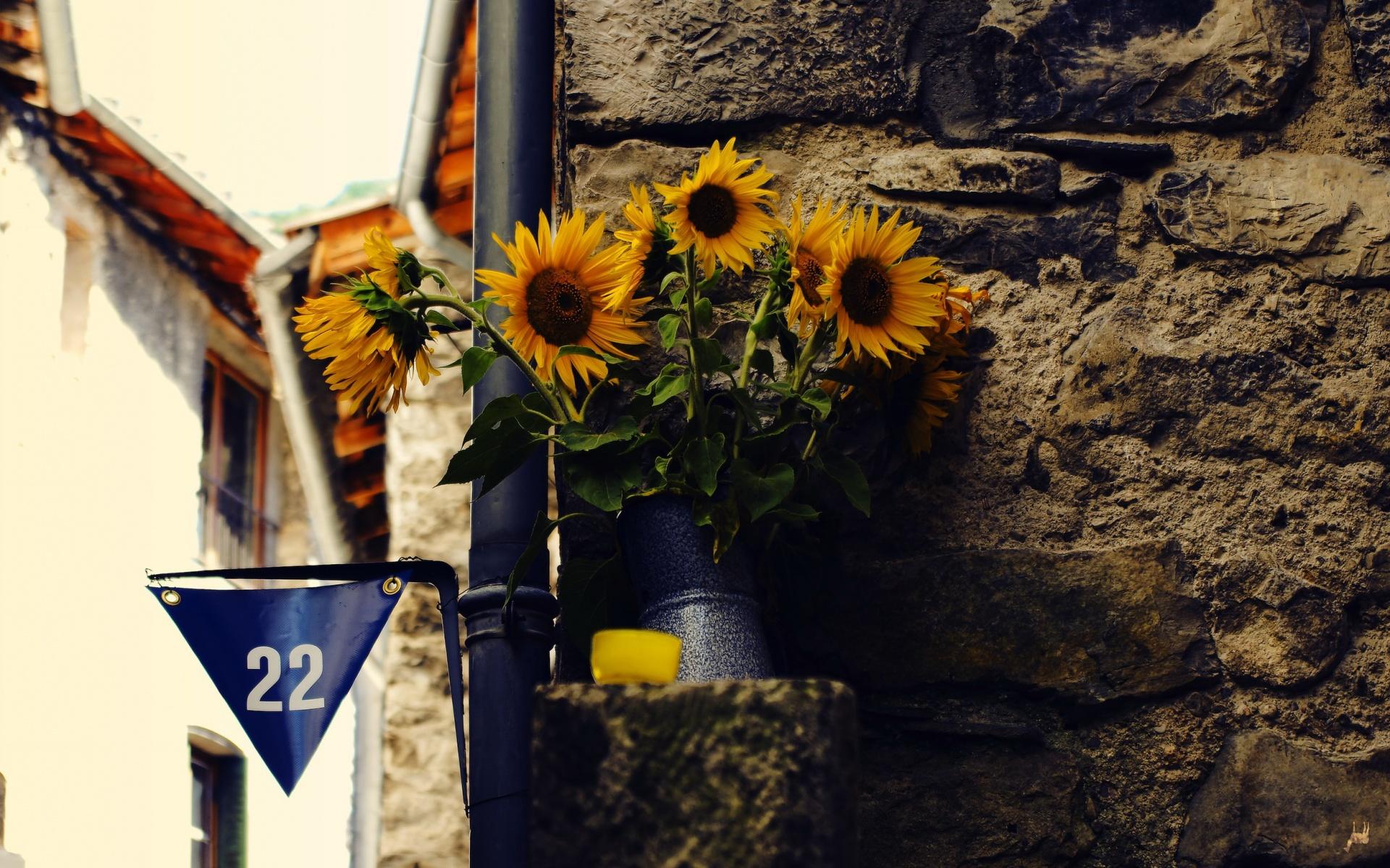 подсолнухи, ваза, цветки