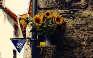 Бесплатные фото подсолнухи,ваза,цветки,лепестки,листья,флажок,улица