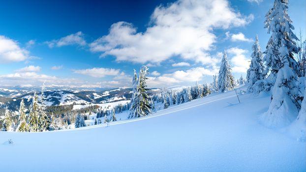 Фото бесплатно снег, спуск, елки