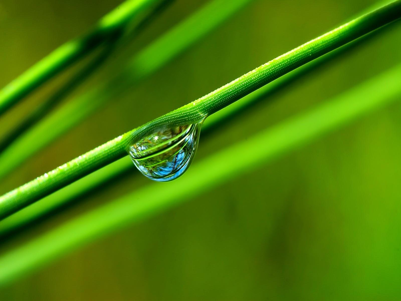 трава, зеленая, стебли