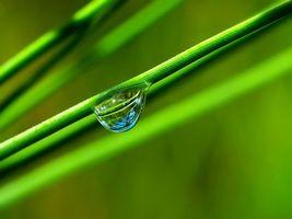 Бесплатные фото трава,зеленая,стебли,капля,вода,отражение,макро
