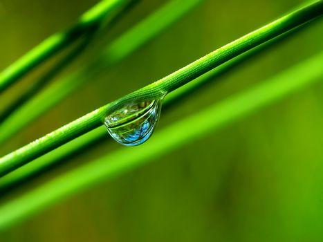 трава, зеленая, стебли, капля, вода