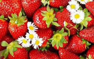Бесплатные фото ягода,клубника,красная,спелая,ромашки,белые,еда