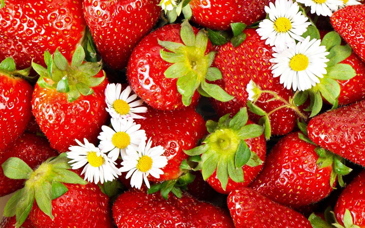 Фото бесплатно ягода, клубника, красная, спелая, ромашки, белые, еда, еда