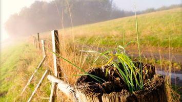 Фото бесплатно забор, трава, солнце