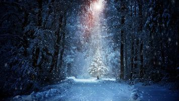 Фото бесплатно одинокая елочка, лес, снегопад