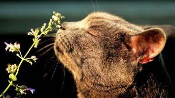 Бесплатные фото кот нюхает цветок