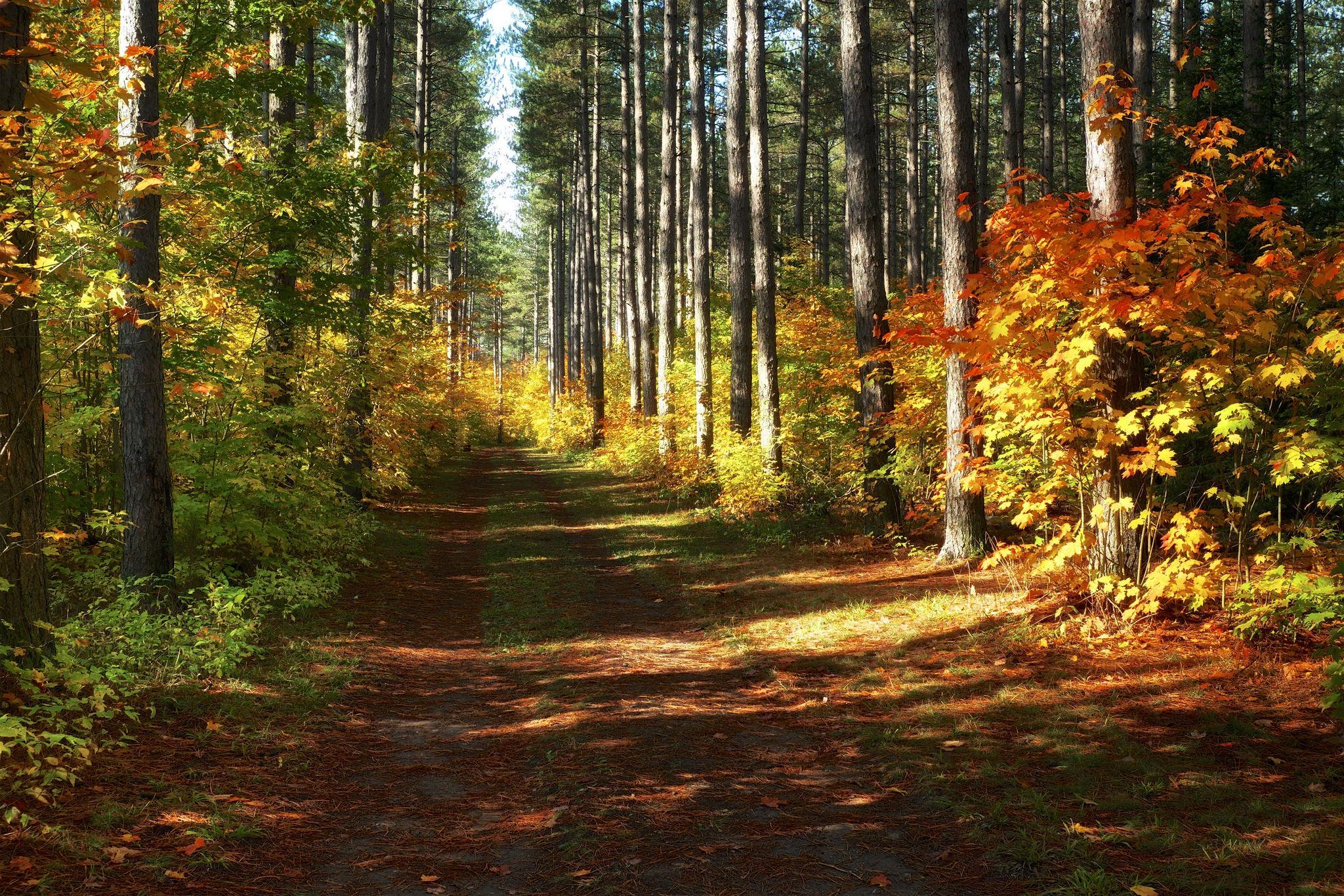 Подруге, осень в лесу открытки