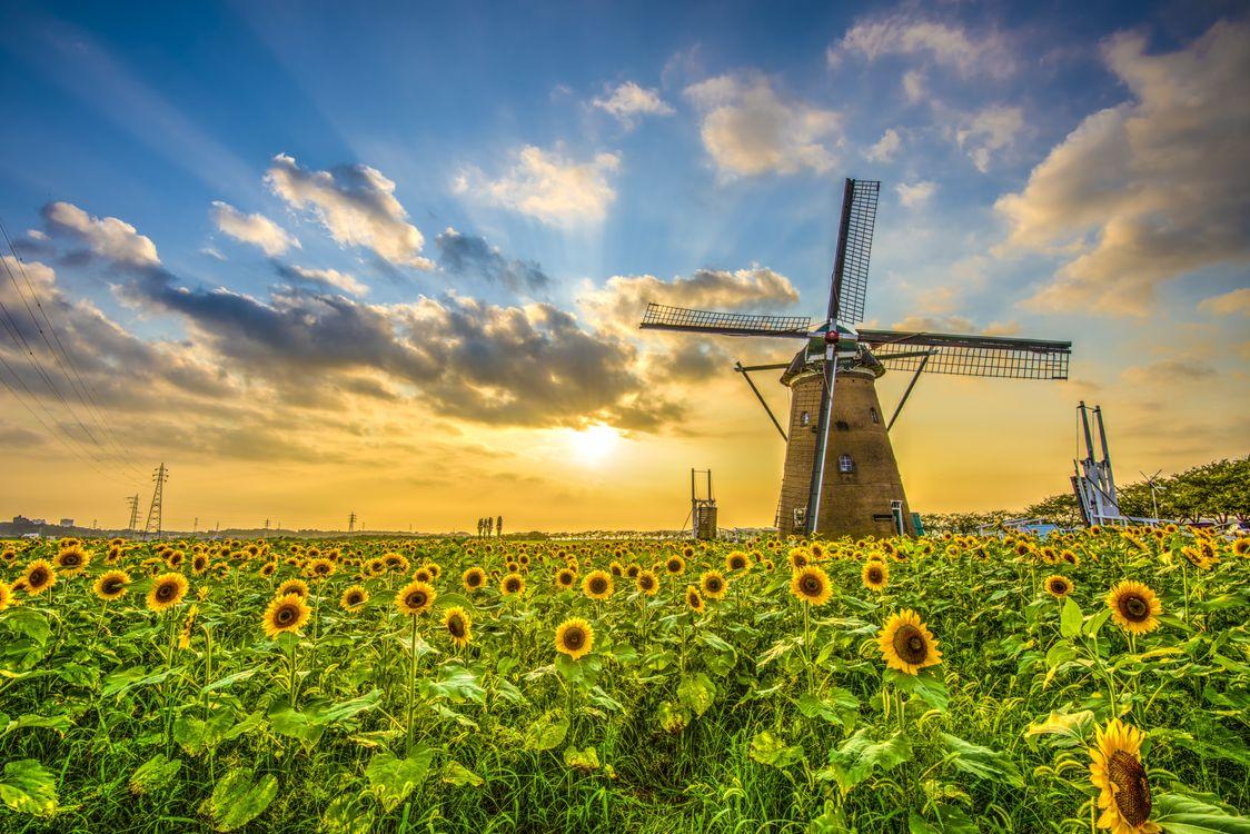 Фото бесплатно поле, подсолнухи, закат, мельница, пейзаж, пейзажи