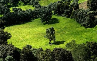 Бесплатные фото поляна,трава,деревья,кроны,зеленые,вид сверху