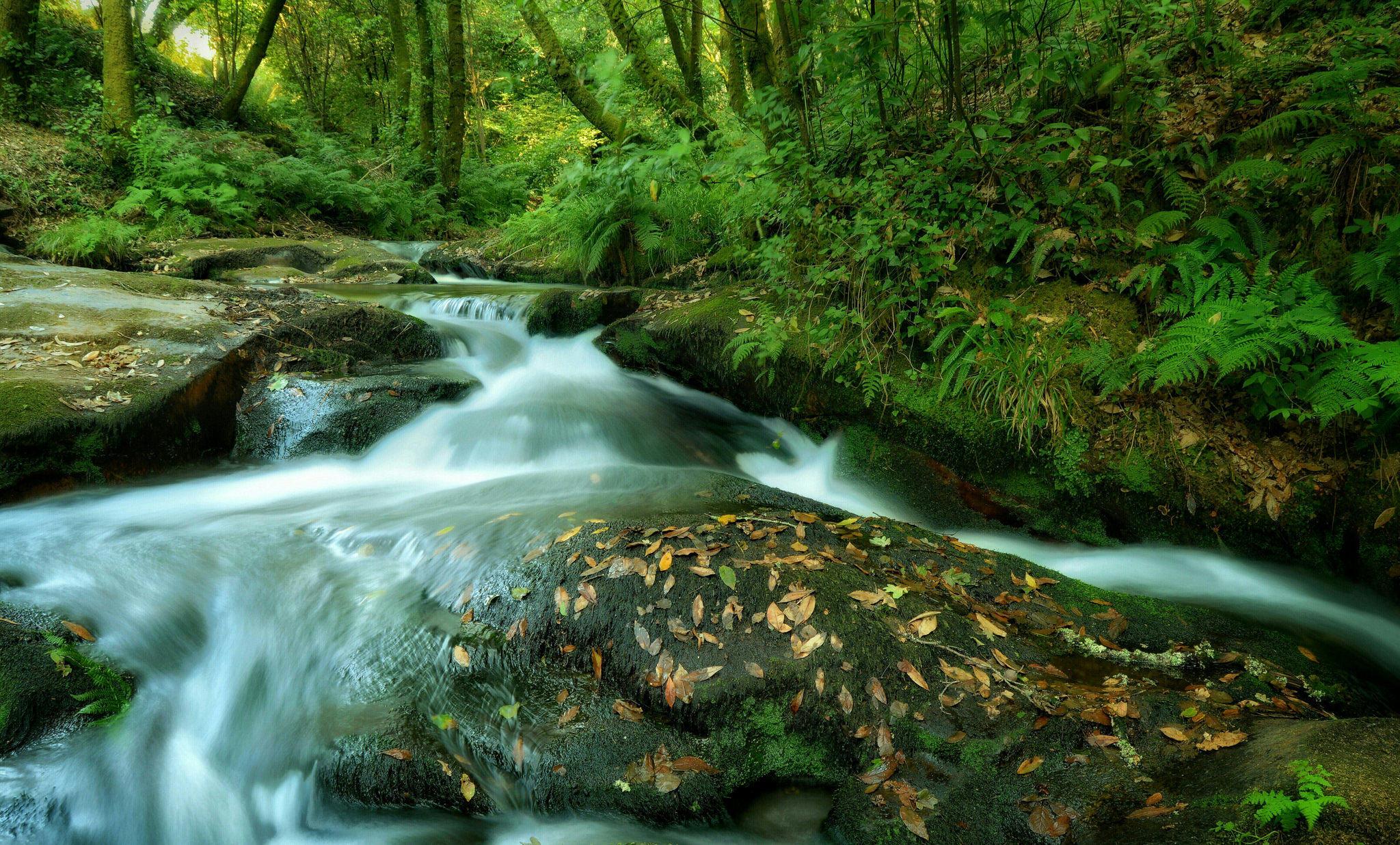 Обои река, речка, водопад, деревья