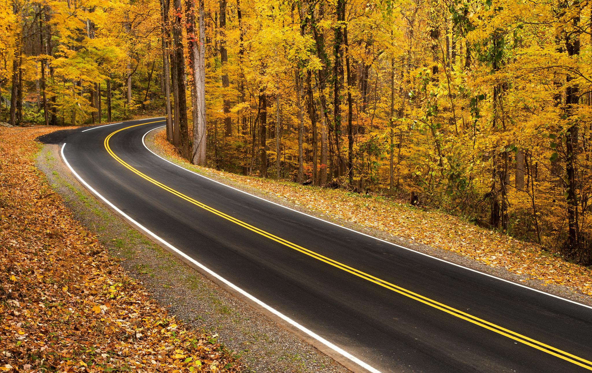 автомобиль осень лес дорога  № 3771412  скачать