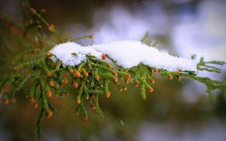 Фото бесплатно зима, растение, ветви