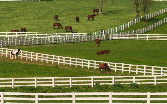 Фото бесплатно лошади, кони, загоны