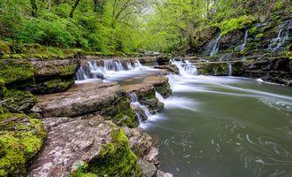 Фото бесплатно лес, деревья, скалы