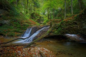 Бесплатные фото лес, деревья, речка, водопад, природа