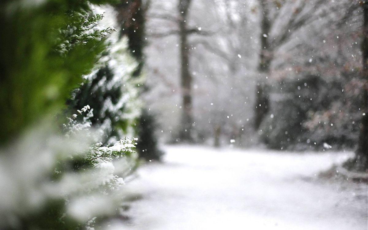 Фото бесплатно зимняя тропинка, снег, елки - на рабочий стол