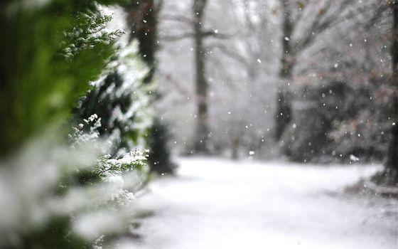 Бесплатные фото зимняя тропинка,снег,елки,ветви