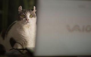Бесплатные фото кошка,морда,глаза,зеленые,шерсть,ноутбук