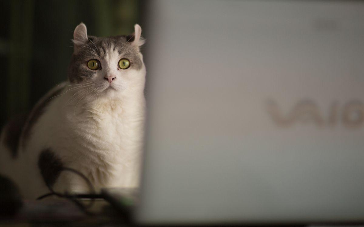 Фото бесплатно кошка, морда, глаза, зеленые, шерсть, ноутбук, кошки