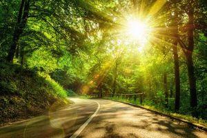 Фото бесплатно солнечные лучи, солнце, деревья