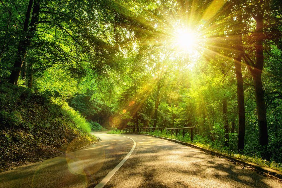 Фото бесплатно солнечные лучи, солнце, деревья - на рабочий стол