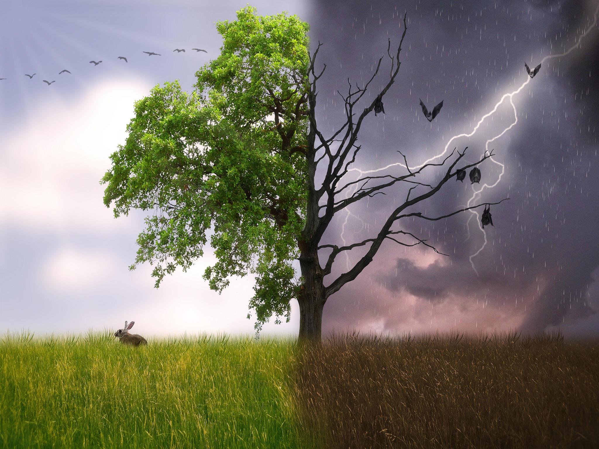 Обои поле, дерево, фантазия