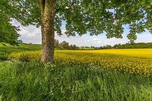 Обои поле, весна, холмы, пастбище, деревья, цветы, пейзаж