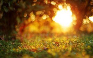 Фото бесплатно закат солнца, парк, деревья
